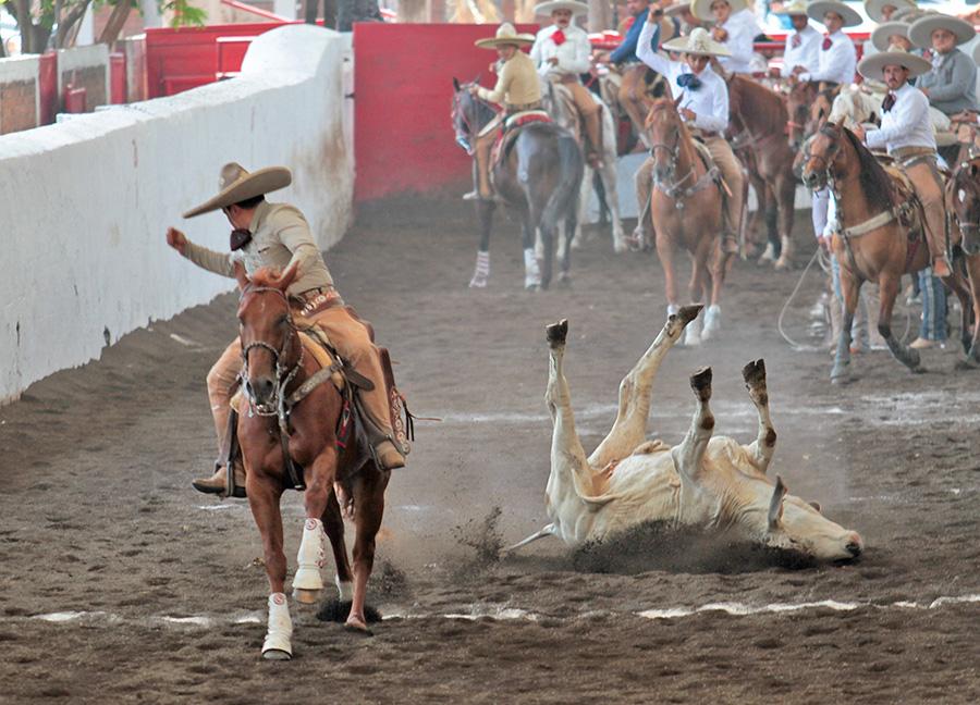 """Rodrigo Vera abanicando con fuerza este toro durante el coleadero, para Tres Ases """"Villa Oro"""""""