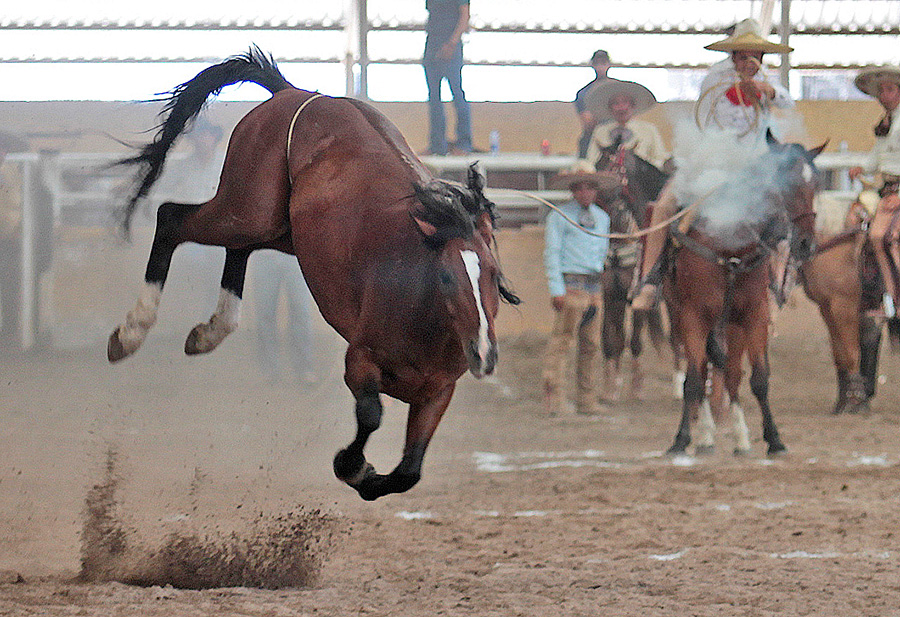 """Rancho San José """"B"""" aseguró un sitio en las finales de Excelencia Charra"""